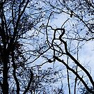 Branches by Michelle Shustack