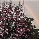 Rainbow over Magnolia Tree by Bev Pascoe