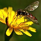 Wasp by Tenee Attoh