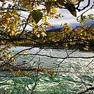 The River by Kim Cinnamon