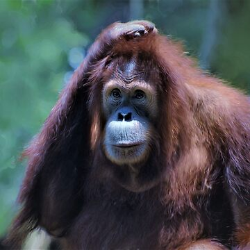 Orangutan by venny