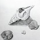 Sea Shell Pencil Drawing2  by Sandra Connelly