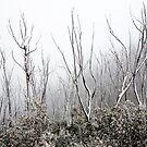 Winterscape 1 by Rob Chiarolli
