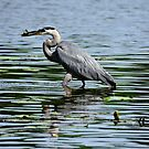 Catch of the day _ Blue Heron by Poete100