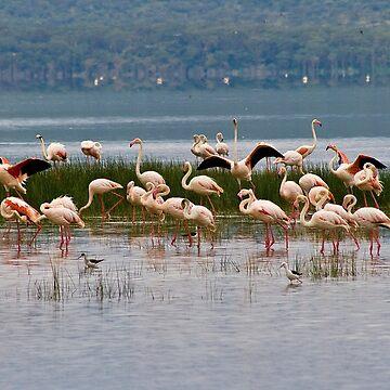 Flamingos at Lake Nakuru Kenya by rolphenstien