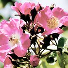 A  Cluster Of Dog Roses by lynn carter