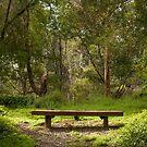 Lonely bench by Rob Chiarolli