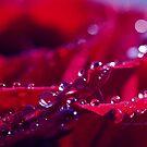 rain drop bokeh by Angel Warda