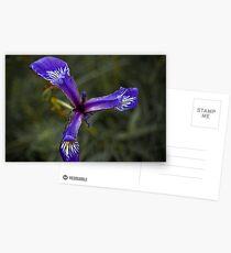 Purple Explosion Postcards