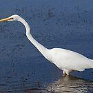 Egret by Rochelle Buckley