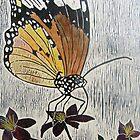Beautiful butterfly by Faye Doherty