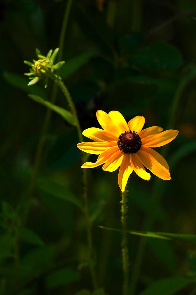 BRIGHT YELLOW FLOWER by Diane Peresie