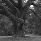 Majestic Oak II by Ostar-Digital