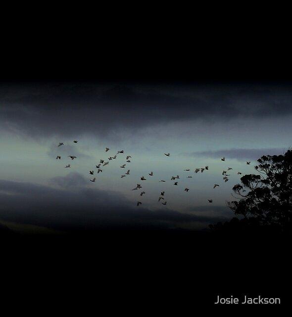 Cockatoos in Flight by Josie Jackson