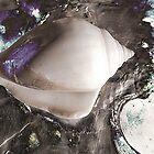 Sea Shells by SexyEyes69