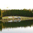 Landscape  by Kamran Baig