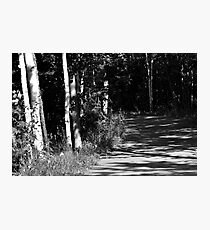 Through the Birches Photographic Print