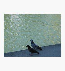 Parisian pigeons, Quai de la Marne Photographic Print