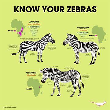 Know You Zebras by PepomintNarwhal