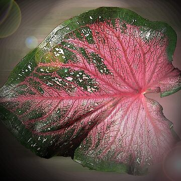 Leaf  by venny