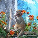Monkey in Darjeeling by Istvan Hernadi