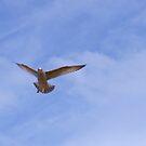 Flight by Gillen