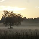 Tree in Morning Fog by clizzio
