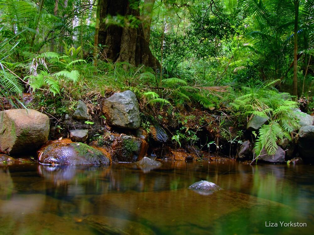 Clear Pool at Cedar Creek by Liza Yorkston