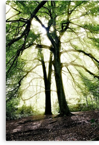 God's Rays, Sunlight streaming through trees by Steve Crompton
