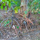 Where's the bicycle? Hervey Bay, Queensland, Australia by Adrian Paul