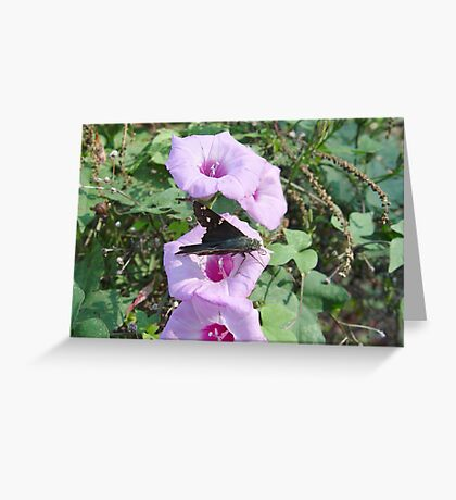 Long-tailed Blue Skipper in Wild Morning Glory Greeting Card