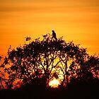 Shared Sunrise by Asoka