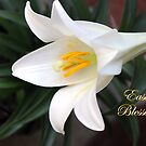 The Easter Lily ~ a Biblical Flower by SummerJade