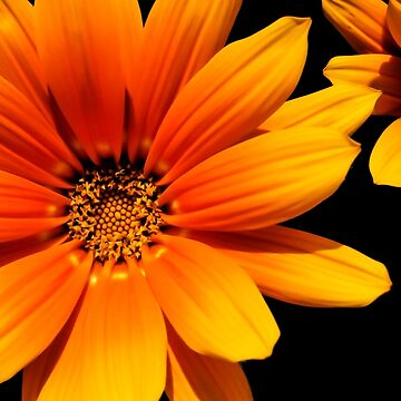 Orange flower by montsefigueiro