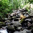 hike up to amicalola falls  by Adria Bryant