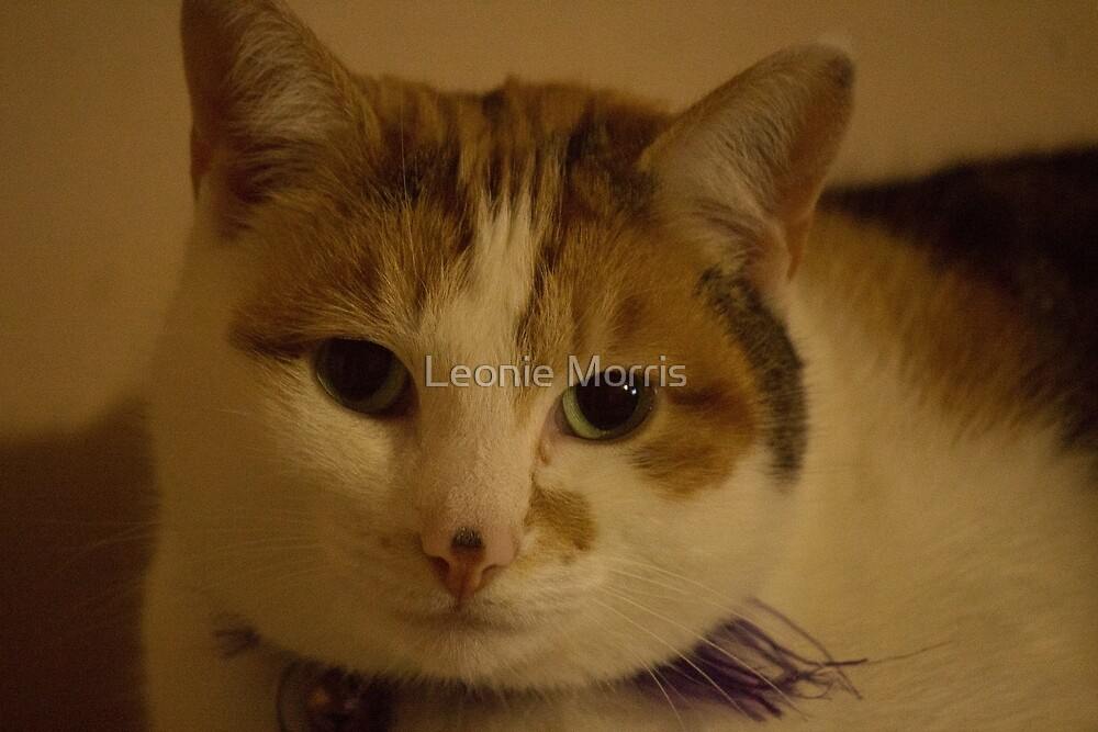 Cat by Leonie Morris