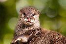 Otter, London Zoo by LudaNayvelt