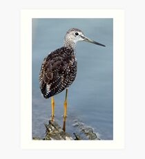 Greater Yellowlegs Looking Over Shoulder Art Print