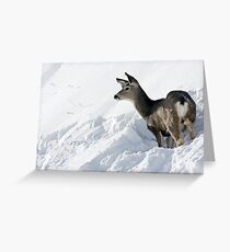 Doe Pausing In Deep Snow Greeting Card