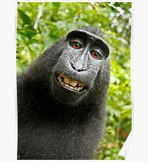 Selfie Monkey Poster