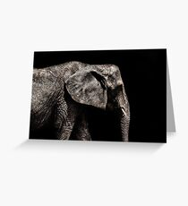 Elephant Portrait Fine Art Print Greeting Card
