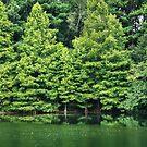 A Study in Green by Jonicool