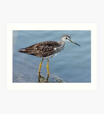 Greater Yellowlegs Profile Art Print