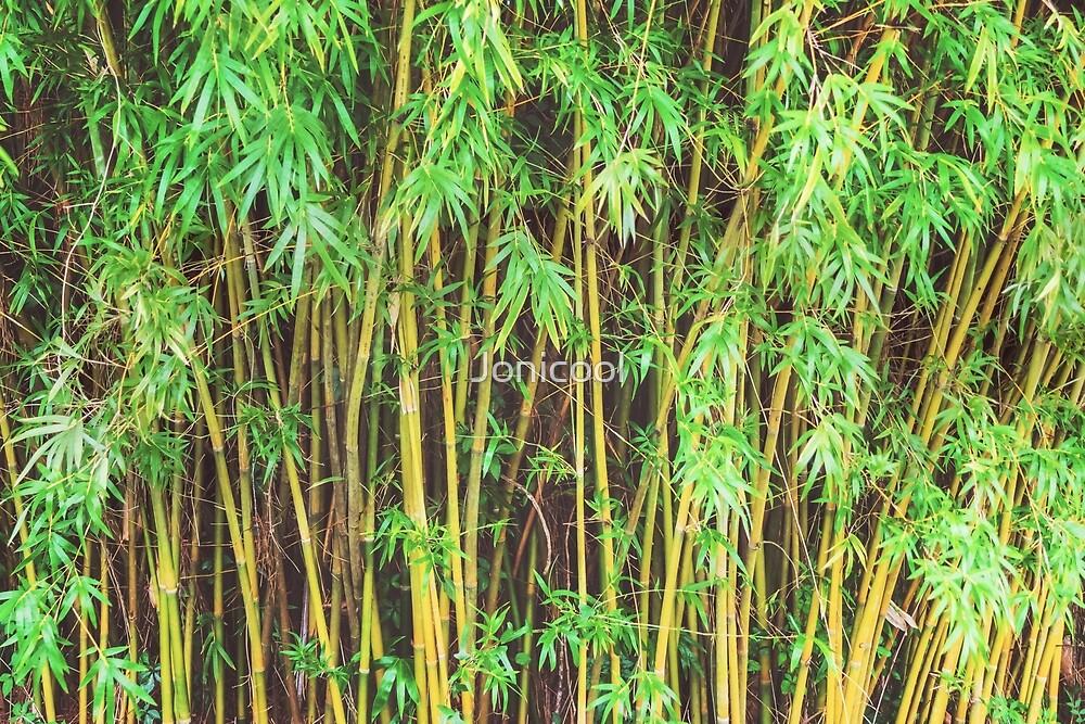 Bamboo by Jonicool