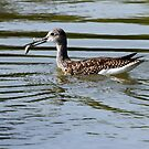 Skilled Anglers Those Greater Yellowlegs by Wolf Read