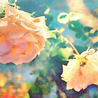 Rose Aglow With Summer Sun by Kay Brewer
