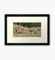 Bounding Elk Framed Print