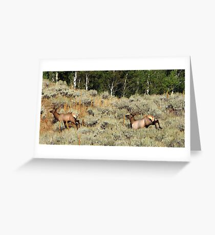 Bounding Elk Greeting Card