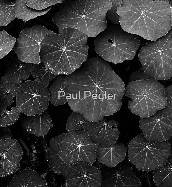 Nasturtium Leaves by Paul Pegler