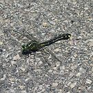 Dragonfly in camo by mussermd